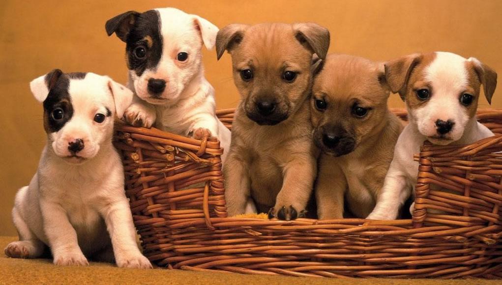 Como abrir um Pet Shop – Confira nossas dicas